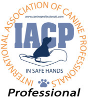 professional member iacp