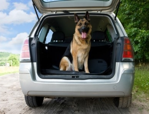 When can your K-9 search the inside of a vehicle?