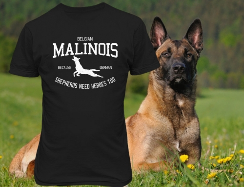 Belgian Malinois Because German Shepherds Need Heroes Too