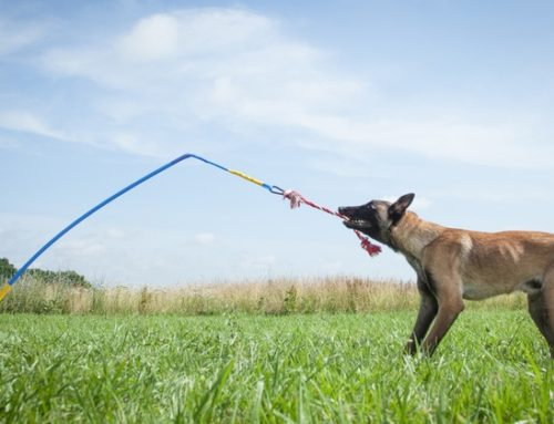 Tether Tug Malinois Tug Toy